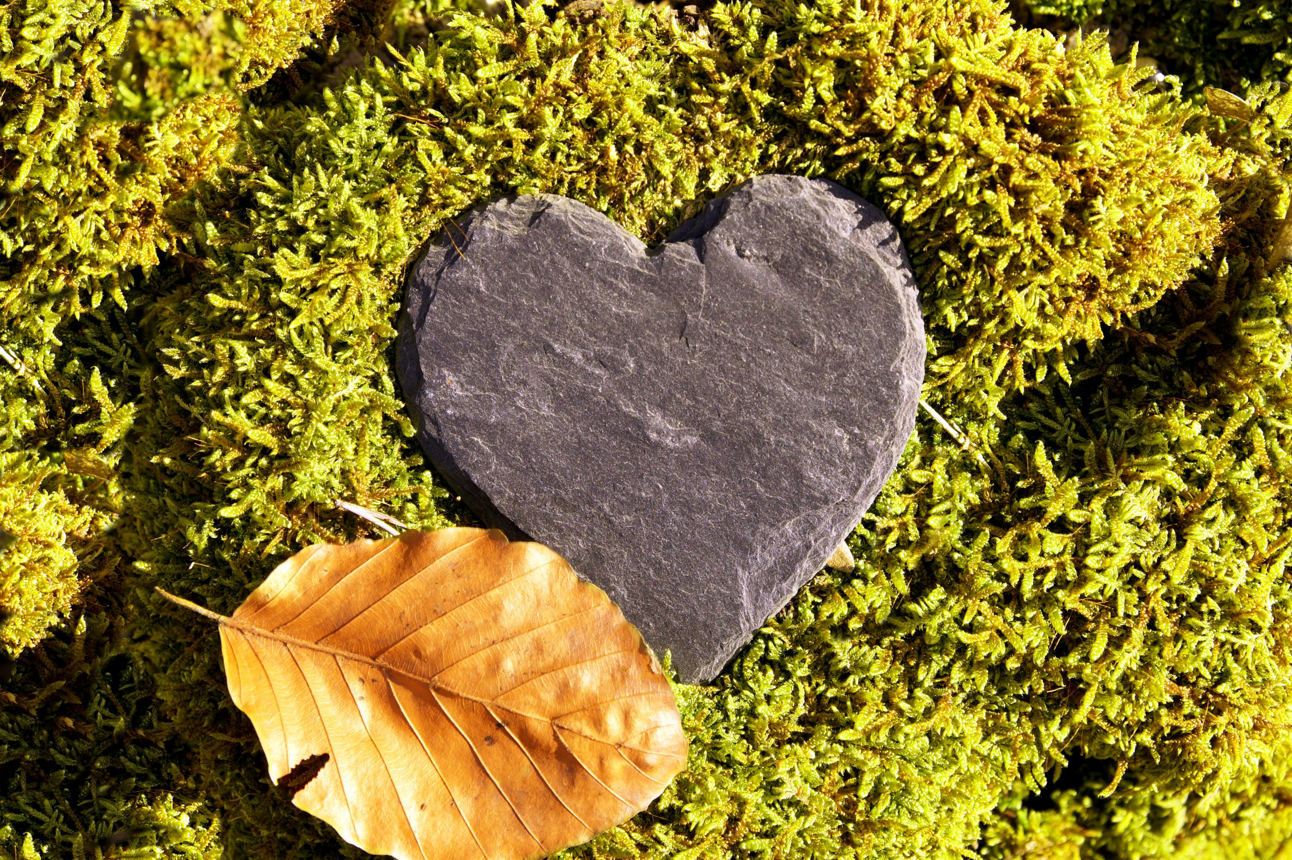 Heart shaped stone surrounded by moss and a single leaf